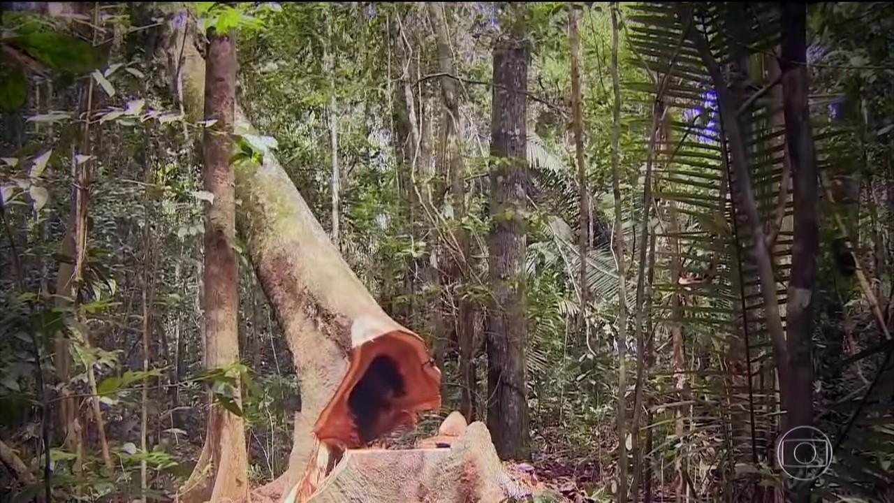 Em um ano, o desmatamento na Floresta Amazônica aumentou 9,5%