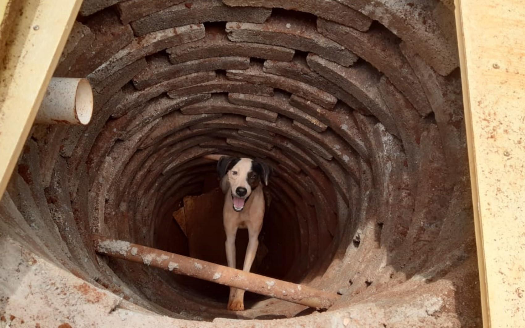 Cachorro é resgatado após cair em fossa de três metros de profundidade, em Rio Verde