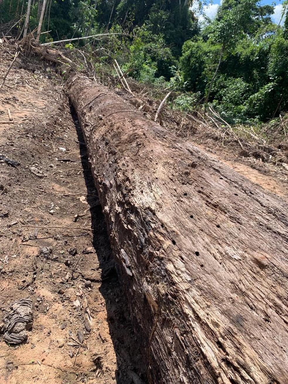 Foram achadas árvores derrubadas para abertura de estrada de terra, segundo a Polícia Civil  — Foto: Arquivo/Polícia Civil