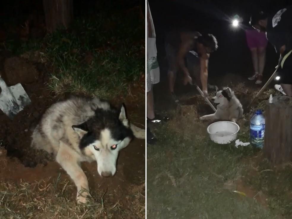 Cachorro levado em furto de sítio é encontrado enterrado vivo em Guareí — Foto: Arquivo Pessoal