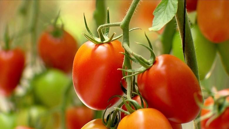 tomate-mg (Foto: Reprodução/TV Globo)