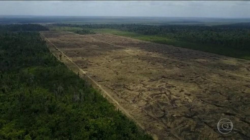 Desmatamento na Amazônia. — Foto: Reprodução/JN