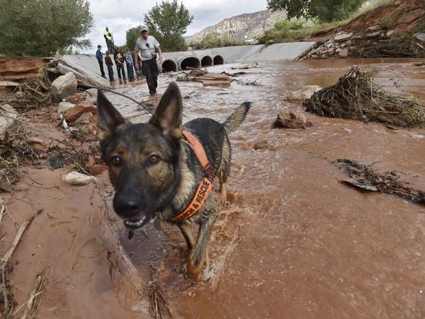 Cão ajuda nas buscas em Short Creek após enchente que atingiu a cidade de Hildale, Utah (Foto: Reuters/David Becker)