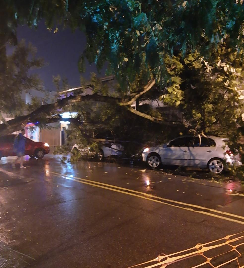 Árvore cai sobre dois carros em Campos, no RJ — Foto: Reprodução/Redes sociais