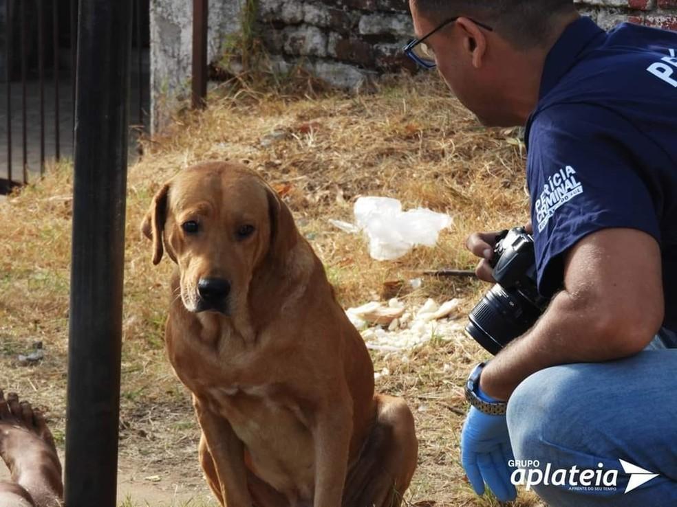 Scooby aguardou todo o trabalho da perícia em seu dono morto em Santana do Livramento — Foto: Matias Moura/Jornal A Plateia