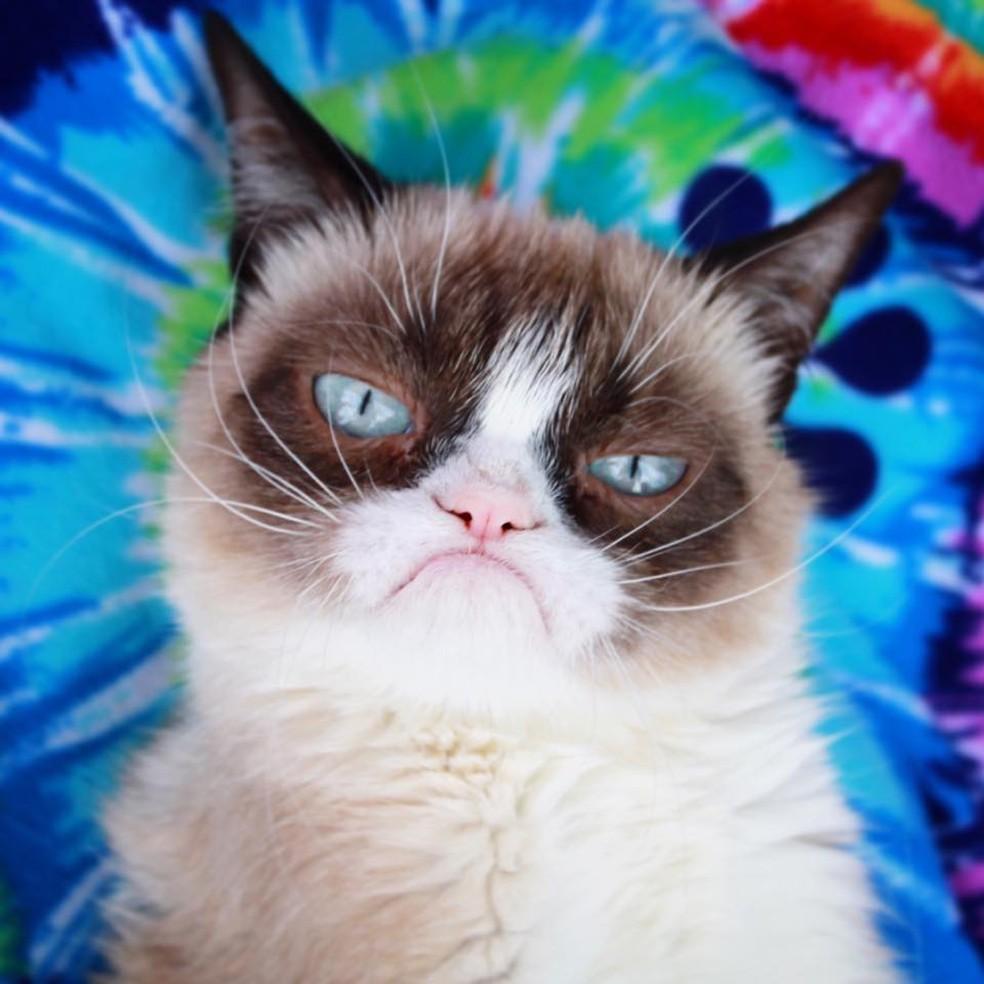 Morre Grumpy Cat, gata 'rabugenta' que se tornou uma lenda da internet — Foto: Reprodução/Facebook