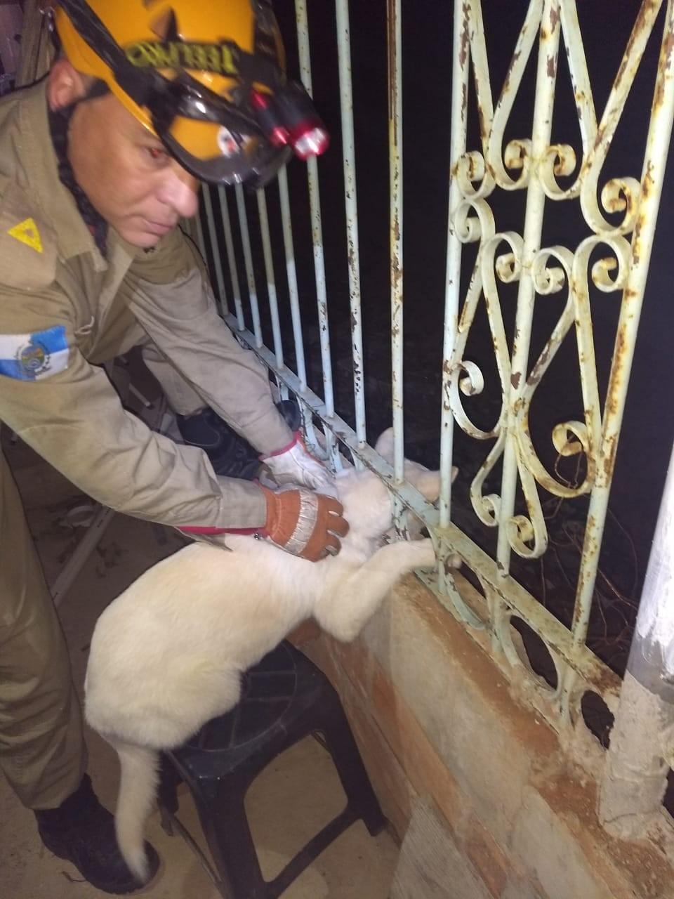 Bombeiros resgatam cachorro que ficou preso em grade em Petrópolis, no RJ - Notícias - Plantão Diário