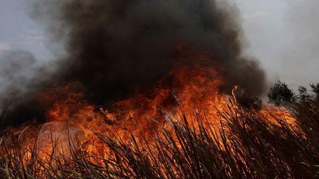 Investidores institucionais cobram empresas por ações contra desmatamento da Amazônia - Notícias - Plantão Diário