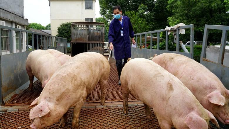 criacao-suinos-china (Foto: Reuters)