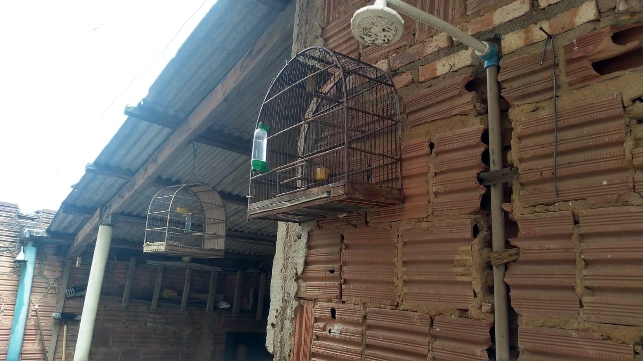 Polícia Ambiental apreende e liberta seis aves silvestres na região durante o fim de semana - Notícias - Plantão Diário