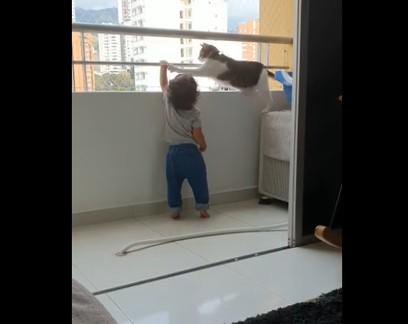 'Gato cuidador' afasta bebê da varanda e viraliza na web