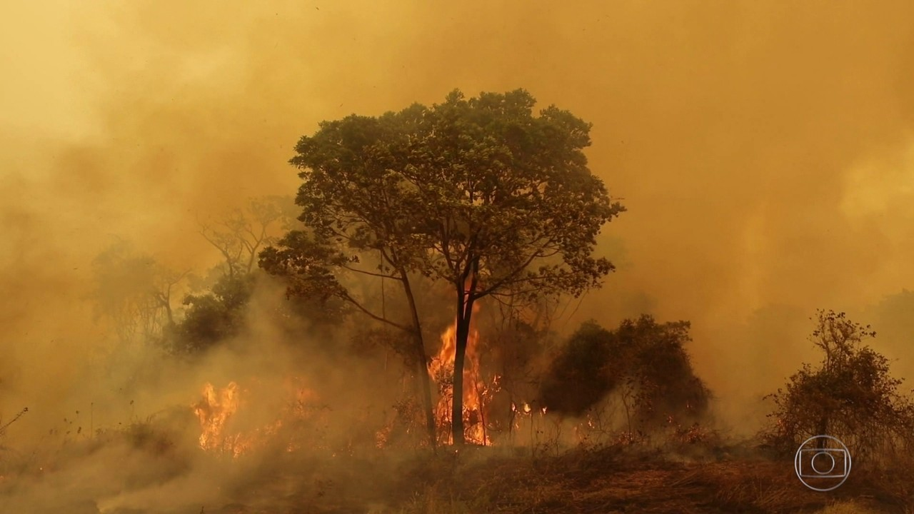 Integrantes da Força Nacional de Segurança ajudam no combate às chamas em Mato Grosso