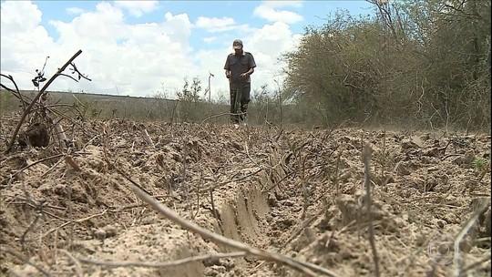 Chuva traz otimismo para agricultores em Pernambuco