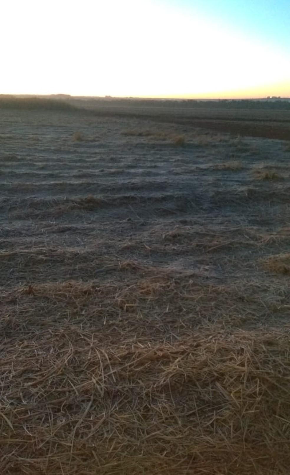 Geada atingiu pastagens principalmente no sul do estado   Foto: Jeferson Alencar/Arquivo pessoal