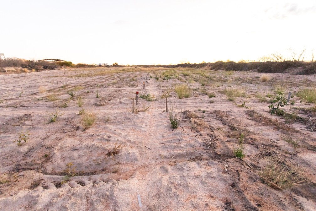 Área da Universidade Federal do Vale do Rio São Francisco usado para pesquisa em recuperação de áreas degradadas — Foto: Celso Tavares/G1
