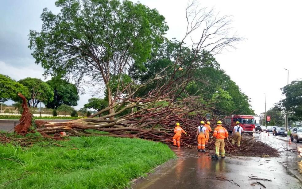 Árvore arrancada pela raiz durante temporal na L4 Sul, em Brasília (Foto: Corpo de Bombeiros/Divulgação)