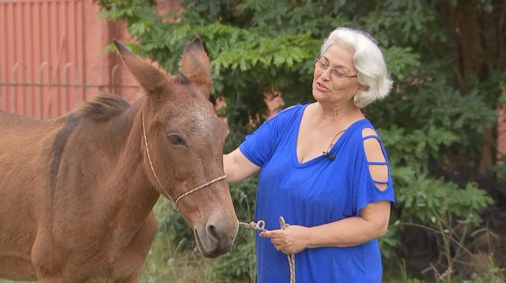 Animal está recebendo os cuidados necessários em lar temporário cedido pela dona Yeda, em Laranjal Paulista (SP) — Foto: Reprodução/TV TEM