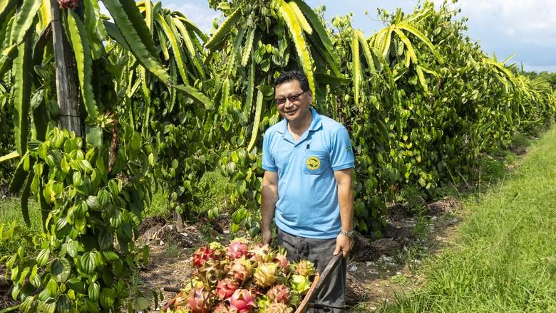 Alberto Oppata, presidente da Cooperativa Agrícola Mista de Tomé-Açú, em seu cultivo de pitaia e pimenta-do-reino (Foto: Fernando Martinho)