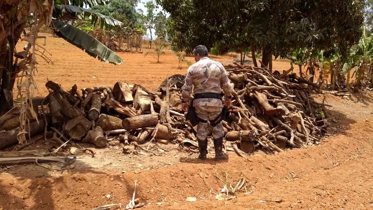 Polícia Militar fecha carvoaria clandestina em assentamento rural no DF