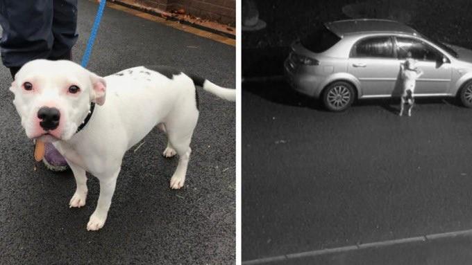 O cachorrinho Snoop quando é abandonado pelo dono (Foto: Reprodução)