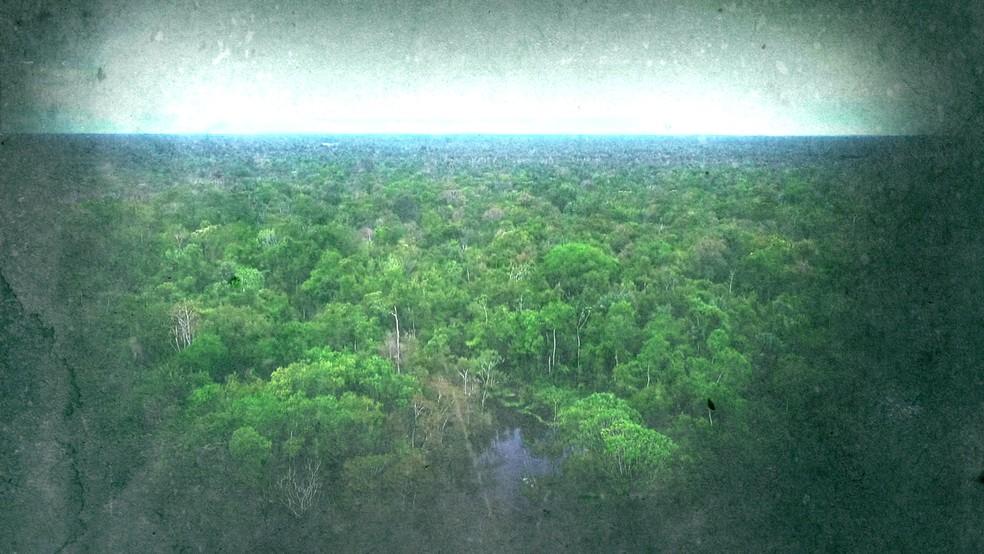 Desmatamento da Amazônia — Foto: Reprodução/TV Globo