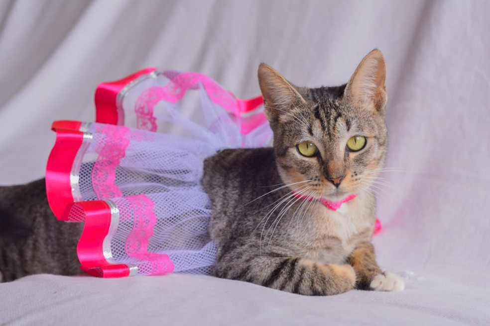 Juju ganhou ensaio fotográfico para estimular a adoção animal — Foto: Divulgação