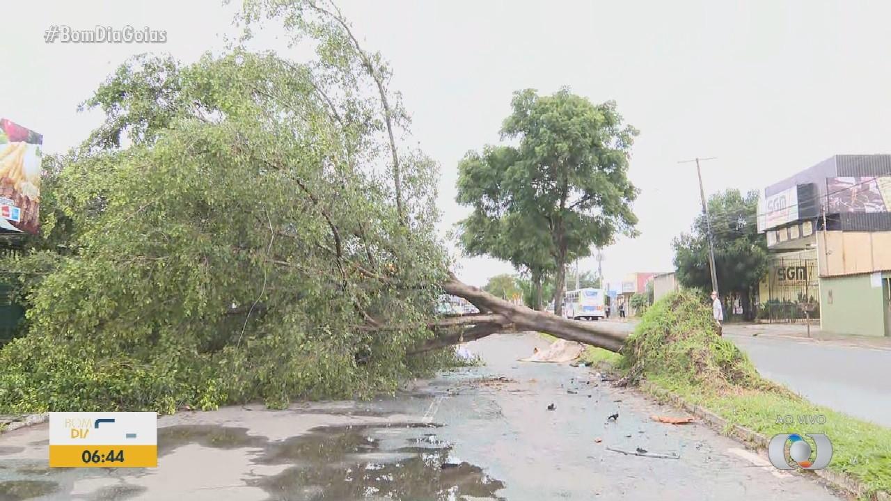 Árvore cai durante chuva e bloqueia rua, em Aparecida de Goiânia
