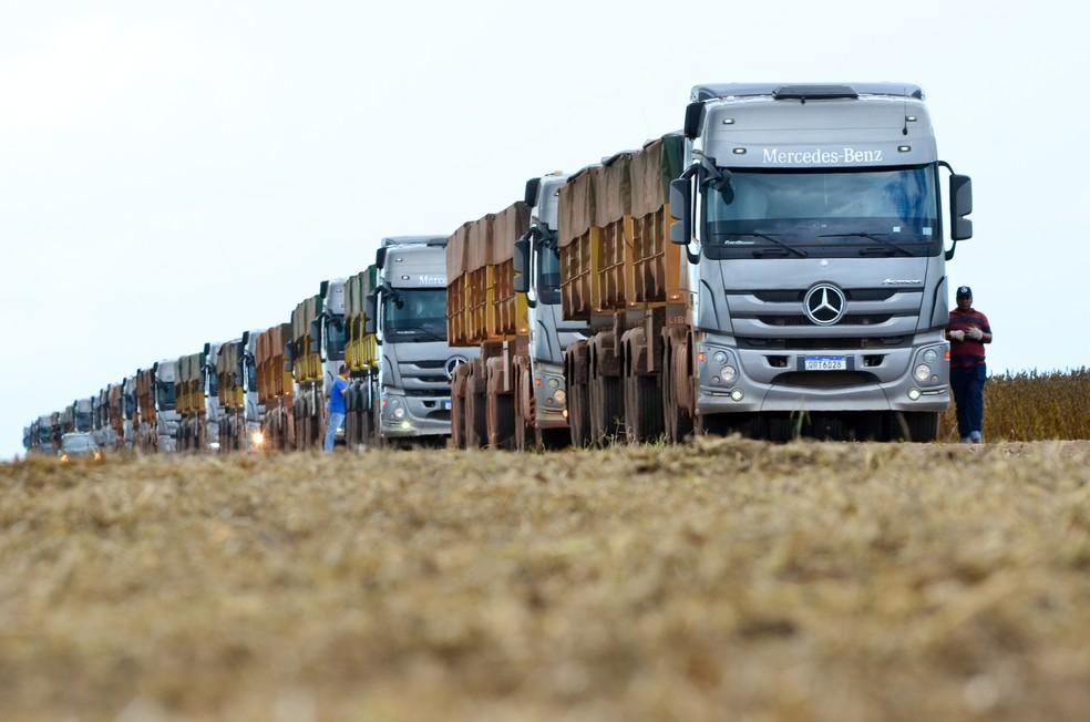 50 caminhões da Mercedes trabalham na logística de transporte e distribuição dos grãos  — Foto: Divulgação
