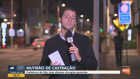 Mutirão de castração de cães e gatos abre inscrições em São José, na Grande Florianópolis