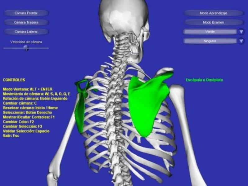 Esqueleto 3D | Download | TechTudo