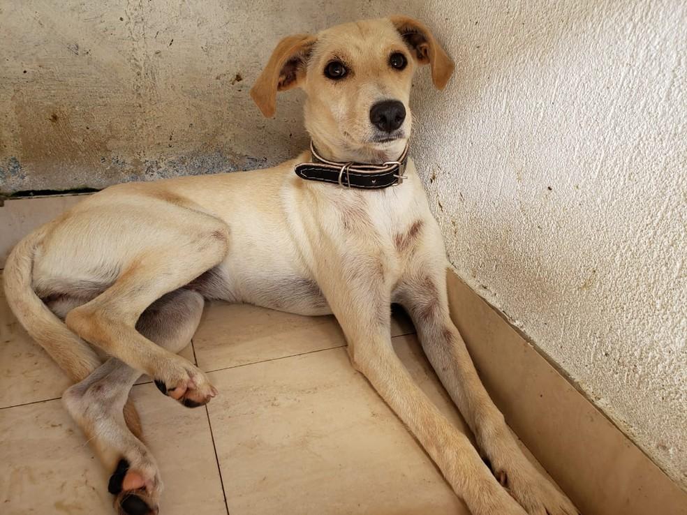 Cão é resgatado após ser flagrado cavando local onde tutor foi soterrado em Guarujá, SP — Foto: Divulgação
