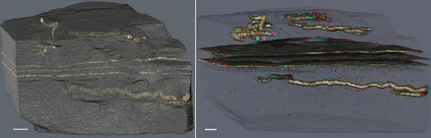 Tubos preenchidos com cristais de pirita (gerados pela transformação de bactérias de tecido biológico) encontrados em camadas de minerais de argila. Camadas horizontais paralelas são tapetes microbianos fossilizados. (Foto:  A. El Albani & A. Mazurier/IC2MP/CNRS/Earth Science)