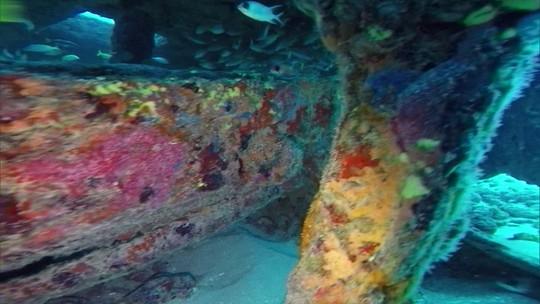 Veja como os naufrágios na costa da Paraíba ajudaram na proteção ambiental do mar