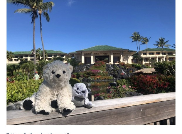 Sutro e seu amigo foram fotografados na frente do hotel no Havaí (Foto: Twittter / annapickard)