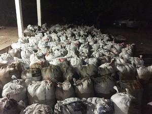 Ao todo 16 toneladas de maconha foram apreendidos em fazenda (Foto: Divulgação/Polícia Civil)