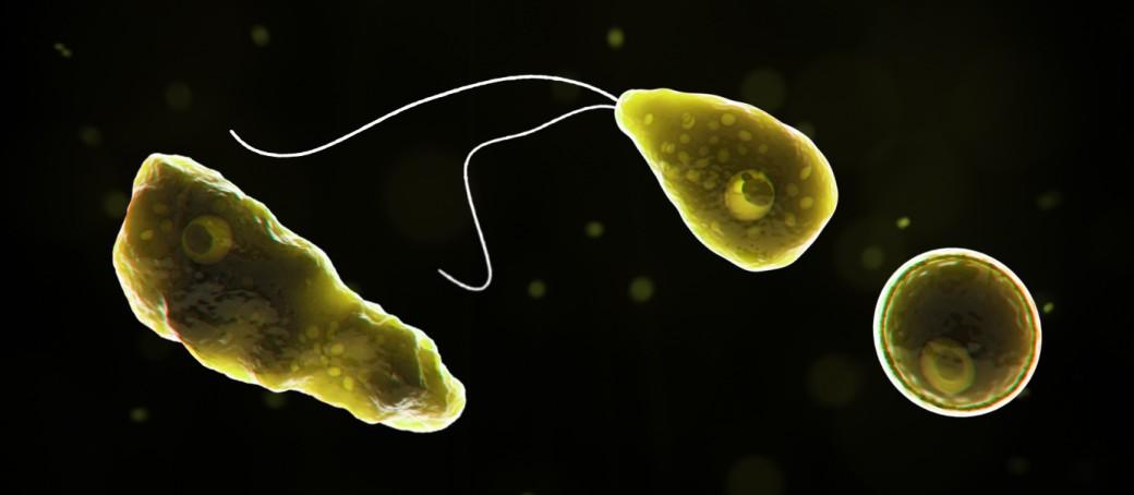 Alertă în Florida după ce a fost identificat un caz de amibă care mănâncă creierul
