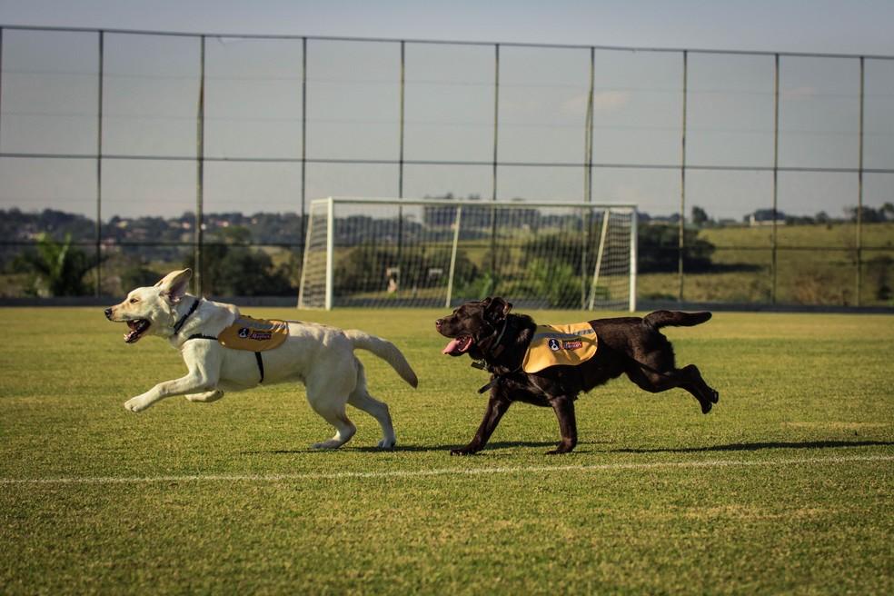 Suporte técnico de treinamento dos cães-guias é oferecido gratuitamente pelo Instituto Magnus (Foto: Divulgação)