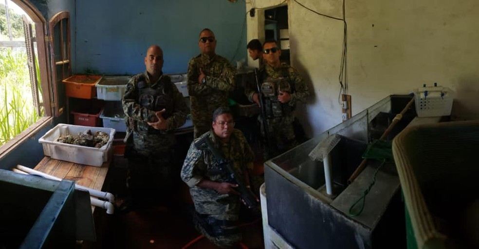 Policiais da 8ª UPAm encontraram animais marinhos em cativeiro em Iguaba Grande, no RJ — Foto: Divulgação/UPAm