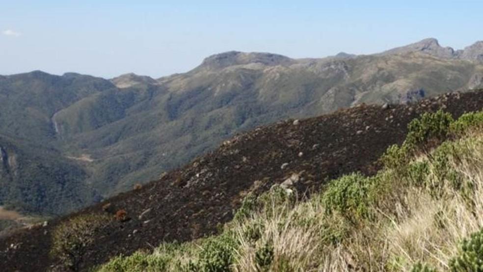 Trecho de mata atingido por incêndio: prevenir as queimadas é mais barato que tentar remediar depois, diz biólogo — Foto: Izar Aximoff