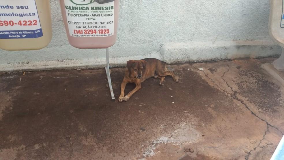 Segundo funcionário do PS, cão chegou a entrar correndo na unidade enquanto dono estava internado em Iacanga (SP)  — Foto: Arquivo pessoal/Sérgio da Matta