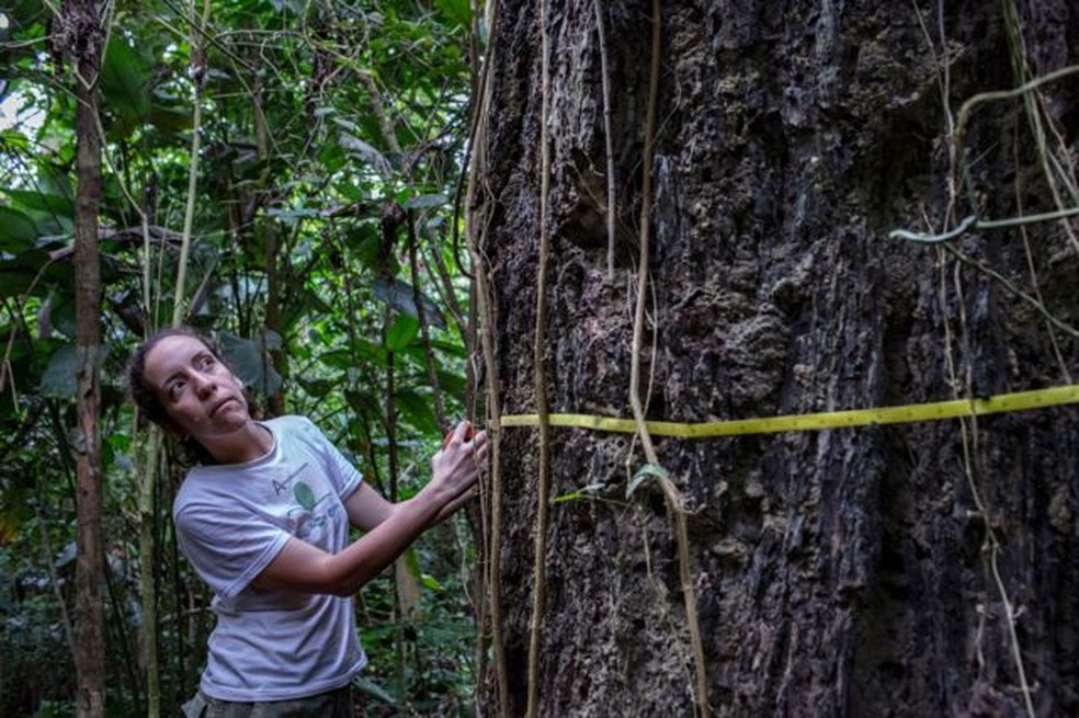 Bióloga estuda os impactos do fogo na Floresta Amazônica. — Foto: MARIZILDA CRUPPE/REDE AMAZÔNIA SUSTENTÁVE via BBC