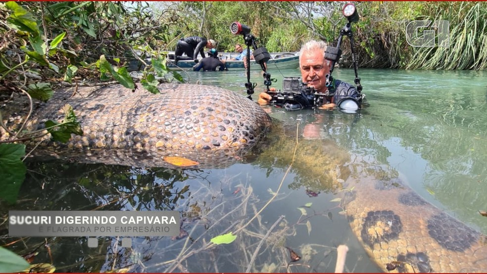 O corpo da capivara boiava sobre o rio, por causa do alimento sendo ingerido.— Foto: Juca Ygarapé/Arquivo Pessoal