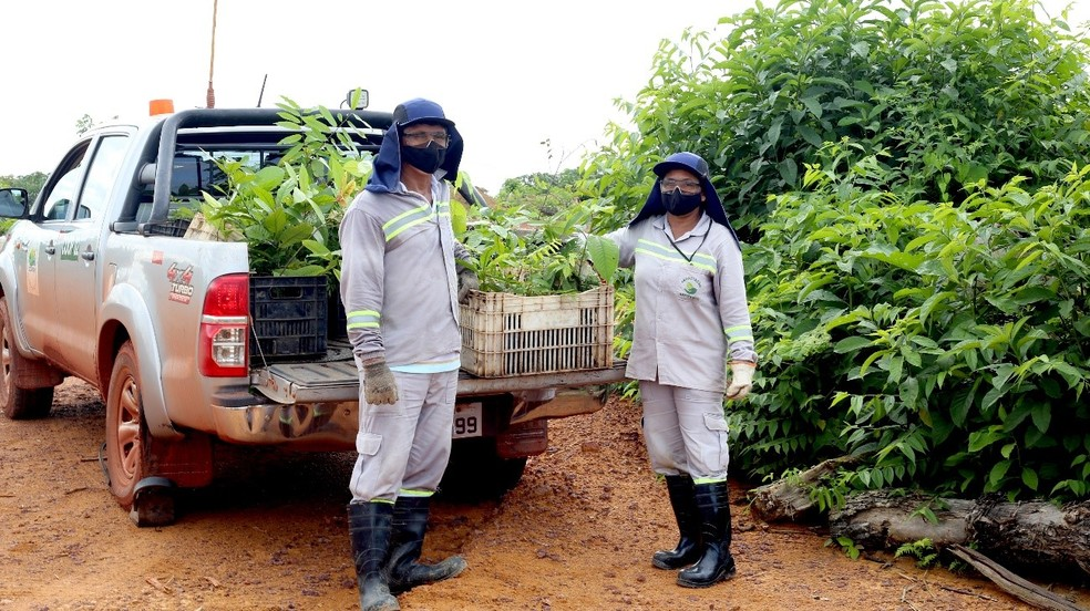 Reabilitação de áreas mineradas em Juruti. — Foto: Alcoa