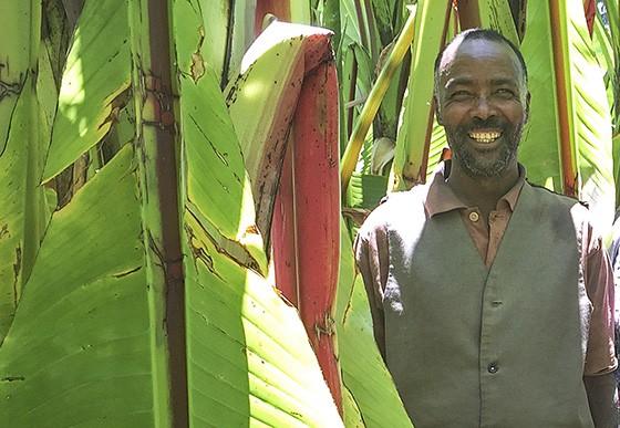 Mikael Babe em sua plantação de ensete. Ele come kocho três vezes ao dia e todos os dias ao ano  (Foto: Giselle Paulino/ÉPOCA)