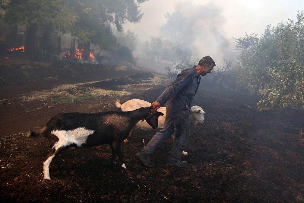 Bombeiro remove cabras de uma fazenda enquanto um incêndio florestal atinge aldeia de Makrimalli, na ilha de Eubeia, na Grécia, na quarta-feira (14)  — Foto: Costas Baltas/ Reuters