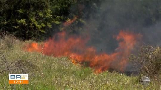 Incêndio atinge área de preservação ambiental no Horto Florestal de Vitória da Conquista