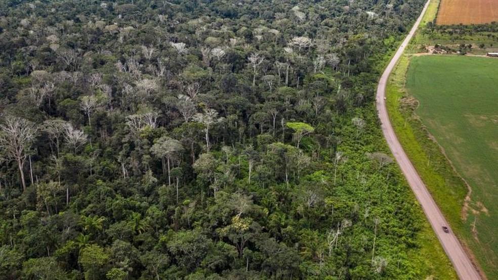 Queimada de floresta amazônica ao lado da BR 163 no Pará deixou grande número de árvores mortas em julho de 2021 (na imagem, sem folhas e esbranquiçadas) — Foto: Marizilda Cruppe/Rede Amazônia Sustentável