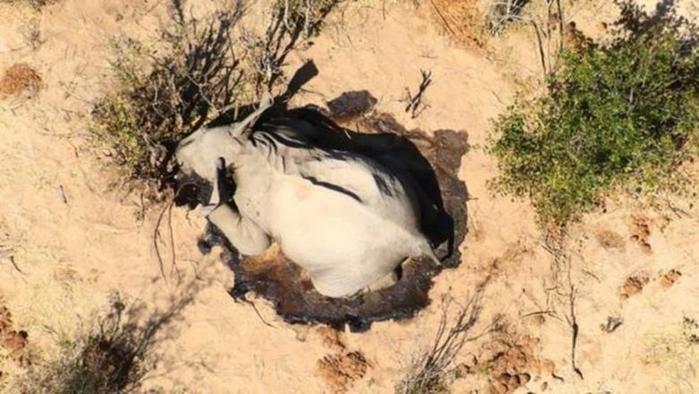 Não há ainda nenhuma conclusão oficial sobre as causas das mortes — Foto: Divulgação/Via BBC