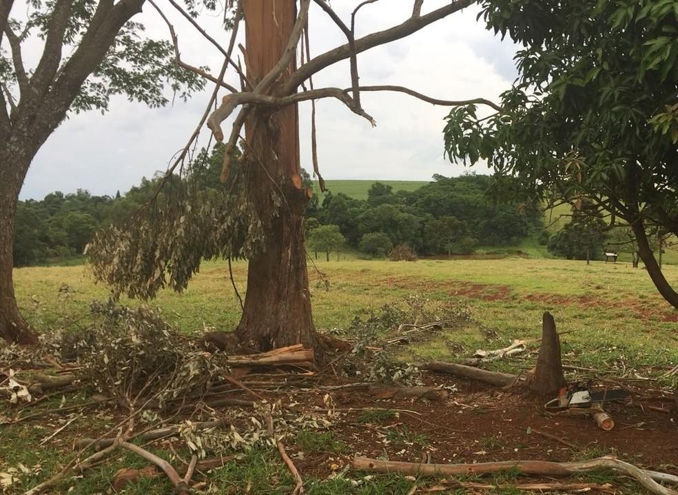 Segundo a Polícia Civil, homem de 51 anos estava cortando um galho de árvore quando foi atingido pelo raio (Foto: Polícia Civil/Divulgação)