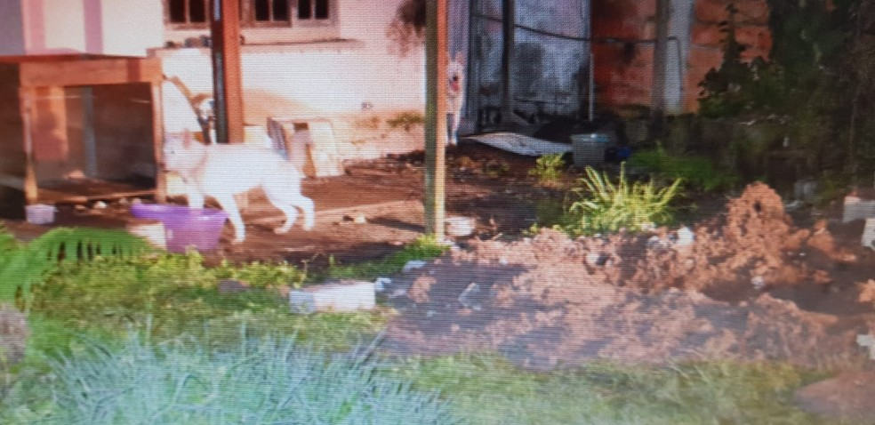 Homem mostrou aos policiais onde Rosana foi enterrada, no quintal de sua residência em Guarujá — Foto: G1 Santos